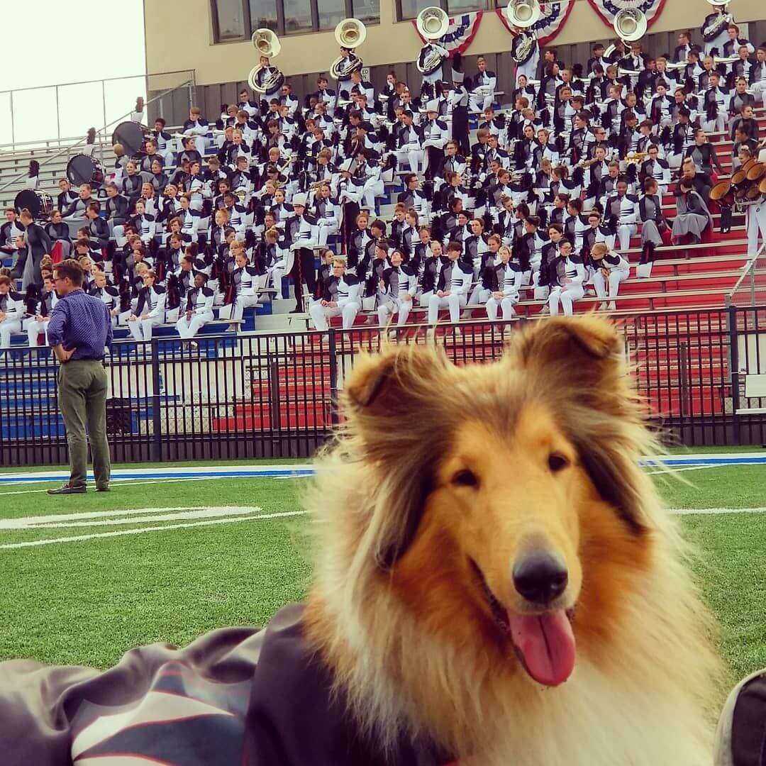 Jazz the Bixby Band Dog